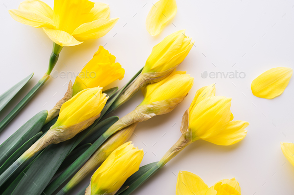 Yellow flowers on a white background. - Stock Photo - Images