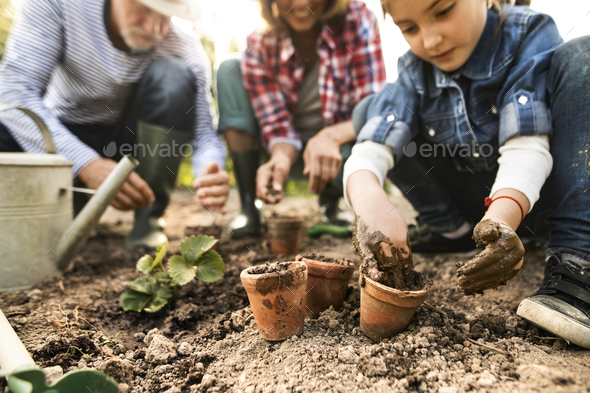 Senior couple with granddaughter gardening in the backyard garden. - Stock Photo - Images