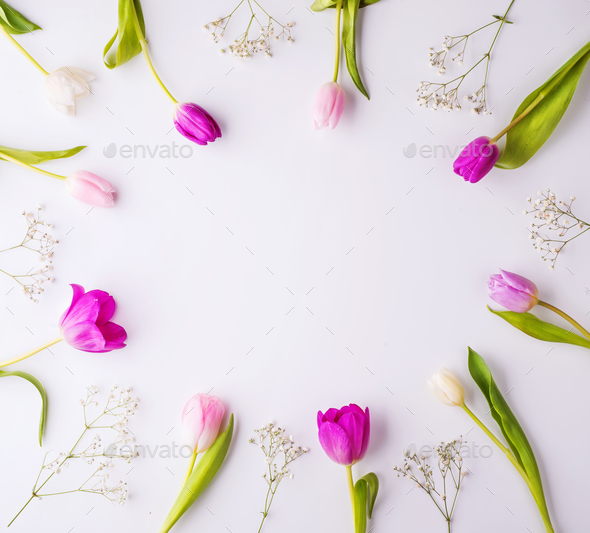 Flowers on a white background. - Stock Photo - Images