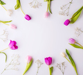 Flowers on a white background. - PhotoDune Item for Sale