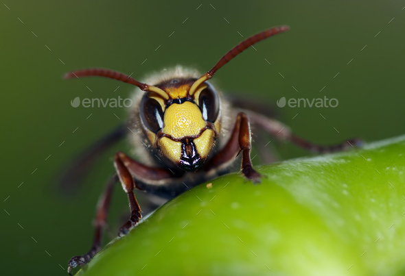 Mandibles - Stock Photo - Images