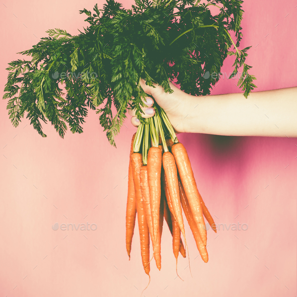 Bunch of fresh carrots in the hand - Stock Photo - Images