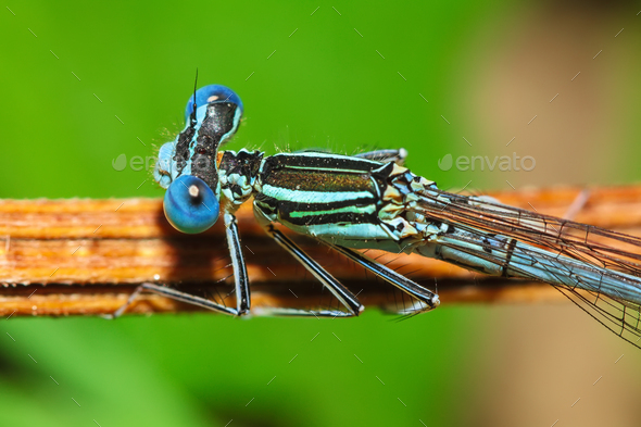 Dragonfly on a plant. - Stock Photo - Images