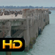 Old Pier Occupied by Many Birds - VideoHive Item for Sale