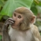 Portrait of a Monkey in the Jungle - VideoHive Item for Sale