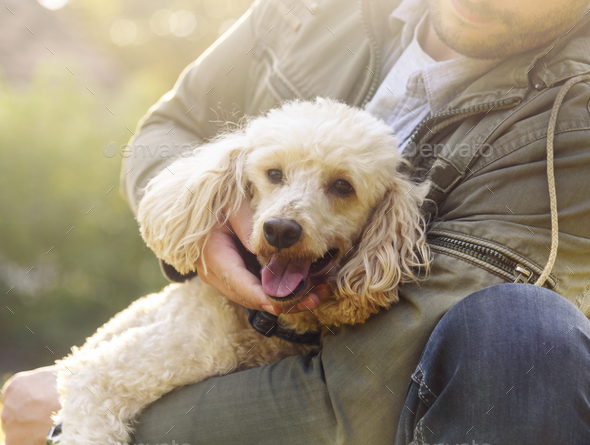 Happy dog and his owner - Stock Photo - Images