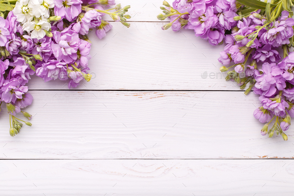 Pink flowers mattiola - Stock Photo - Images