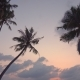 Sunset Through Coconut Palm Tree Leaf Silhouette - VideoHive Item for Sale