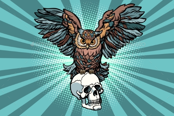 Owl and Human Skull - Animals Characters