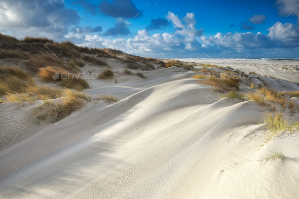 sand dunes by North sea beach on sunny day - Stock Photo - Images