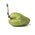 Sprouting green chayote - PhotoDune Item for Sale