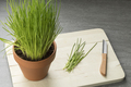 Terracotta  pot with fresh chives - PhotoDune Item for Sale