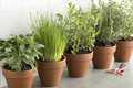 Row of brown terracotta pots with fresh herbs - PhotoDune Item for Sale