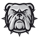 Bulldog Head Vector Illustration