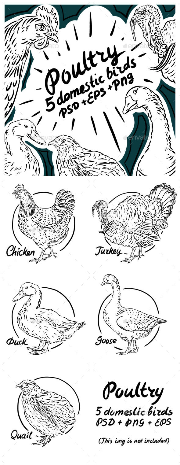 Poultry Sketch Pack - Animals Characters