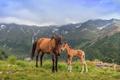 horses grazing - PhotoDune Item for Sale