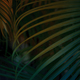 Tropical Palm leaf background. - PhotoDune Item for Sale