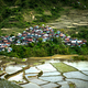 Village houses near rice terraces fields. Amazing abstract textu - PhotoDune Item for Sale