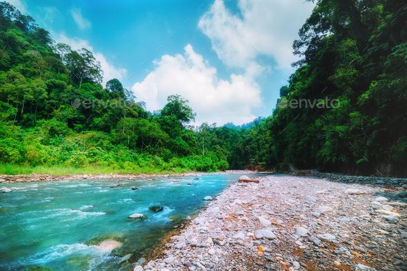 Mountain river and dense jungle. Sumatra, Indonesia. - Stock Photo - Images