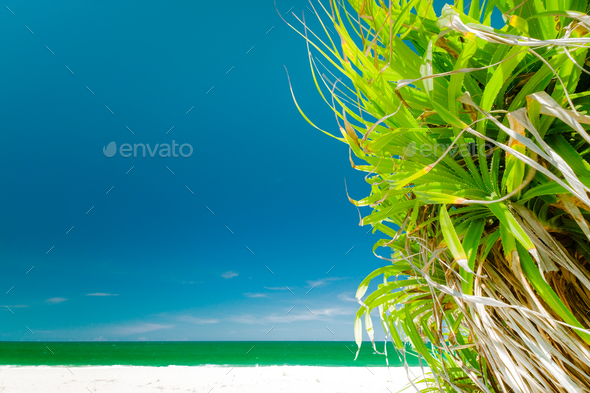 Amazing relaxing view of tropical landscape - Stock Photo - Images