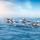Dolphins  jumping under ocean surface lit by sun. Sri Lanka. - PhotoDune Item for Sale