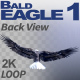 Bald Eagle-1 Back View - VideoHive Item for Sale