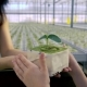 Mom and Daughter Are Walking on the Greenhouse, Are Greeted Against the Background of Greenhouses - VideoHive Item for Sale