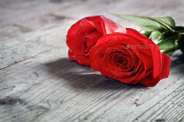 Red roses on wood - Stock Photo - Images