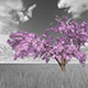 Monochrome Cherry Tree Background - VideoHive Item for Sale
