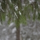 Winter Fir Branch Tree Covered with Snowfall Snowflakes Falling - VideoHive Item for Sale