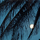 Tropical Night with View of Moon, Palm Tree in Holiday Paradise - VideoHive Item for Sale