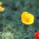 Beautiful Wildflowers Ukraine - VideoHive Item for Sale