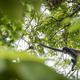 Monkey At Tikal Guatemala - PhotoDune Item for Sale