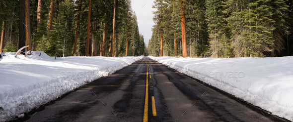 Two Lane Asphalt Road Leads Through Forest Wintertime - Stock Photo - Images