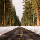 Two Lane Asphalt Road Leads Through Forest Wintertime - PhotoDune Item for Sale