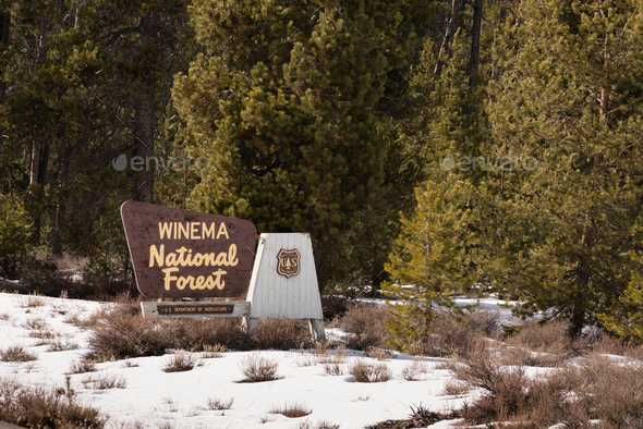 Winter Woods Winema National Forest Welcome Sign - Stock Photo - Images