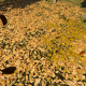 Fall OF The Leaves - VideoHive Item for Sale