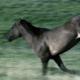 Wild Horses Run Across Hillside - VideoHive Item for Sale