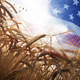 Flag of USA over wheat field - PhotoDune Item for Sale