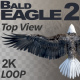 Bald Eagle-2 Top View - VideoHive Item for Sale