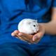Hamster - PhotoDune Item for Sale