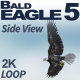 Bald Eagle-5 Side View - VideoHive Item for Sale