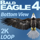 Bald Eagle-4 Bottom View - VideoHive Item for Sale
