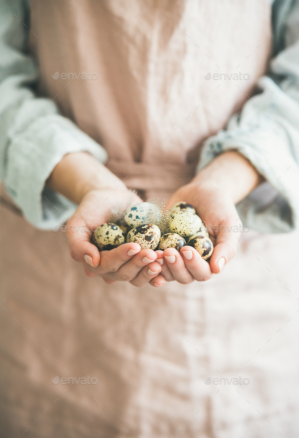 Natural Quail eggs and feather in woman's hands for Easter - Stock Photo - Images