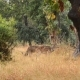 Spotted Deer (Axis Axis) National Park, India - VideoHive Item for Sale