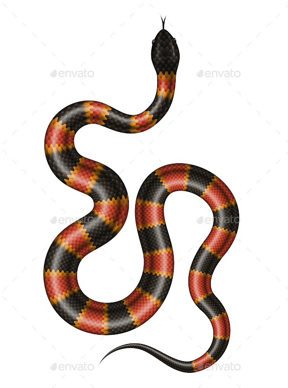 Coral Snake - Animals Characters