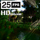 Swamp Forest 02 HD - VideoHive Item for Sale