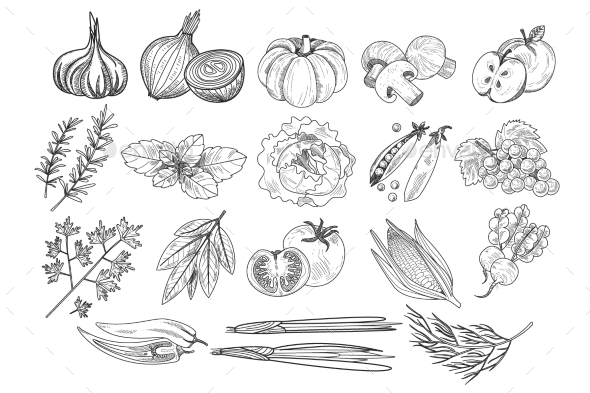 Vector Set of Fruits, Vegetables and Herbs - Food Objects