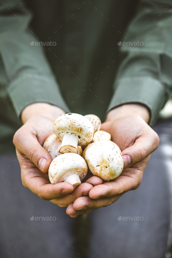 Mushrooms - Stock Photo - Images