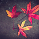 Three red autumn leaves - PhotoDune Item for Sale